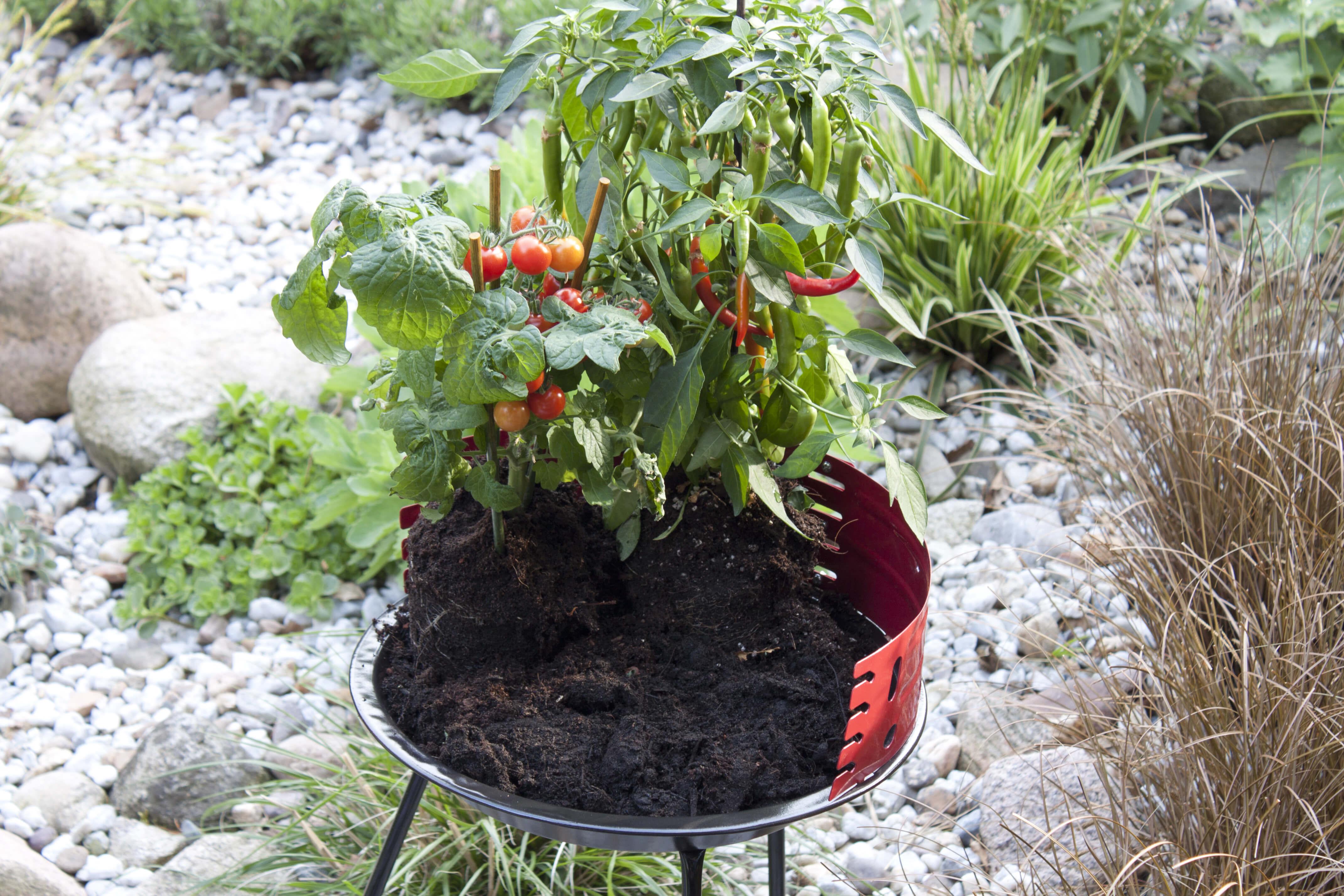 diy urban gardening im grill. Black Bedroom Furniture Sets. Home Design Ideas